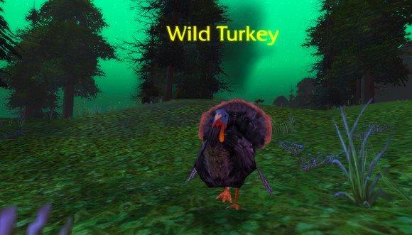 Wild Turkey1